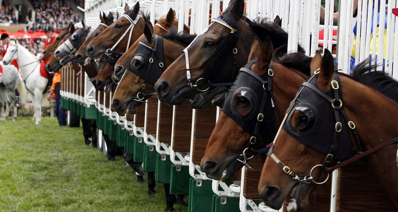 horses in stalls ready to race