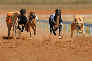 Uk greyhound racing betting site